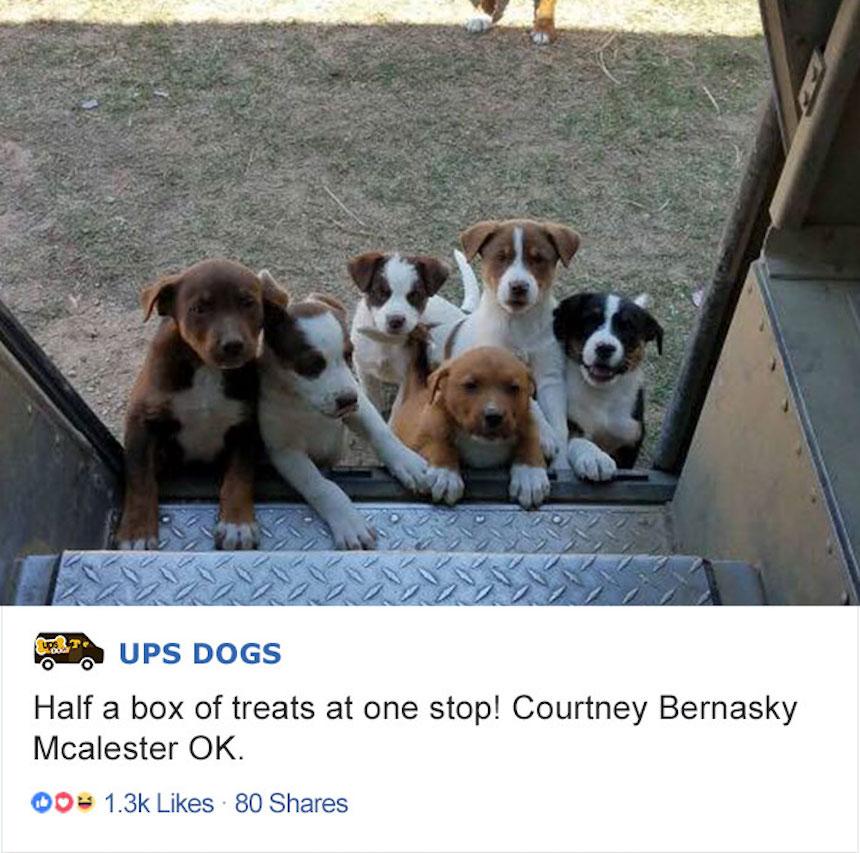 Empleados de UPS y perritos - Cachorritos