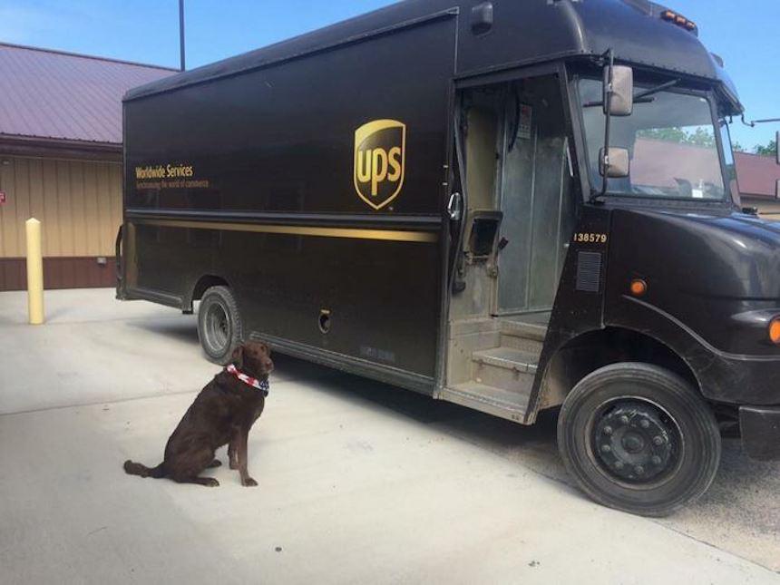 Empleados de UPS y perritos - Camioneta