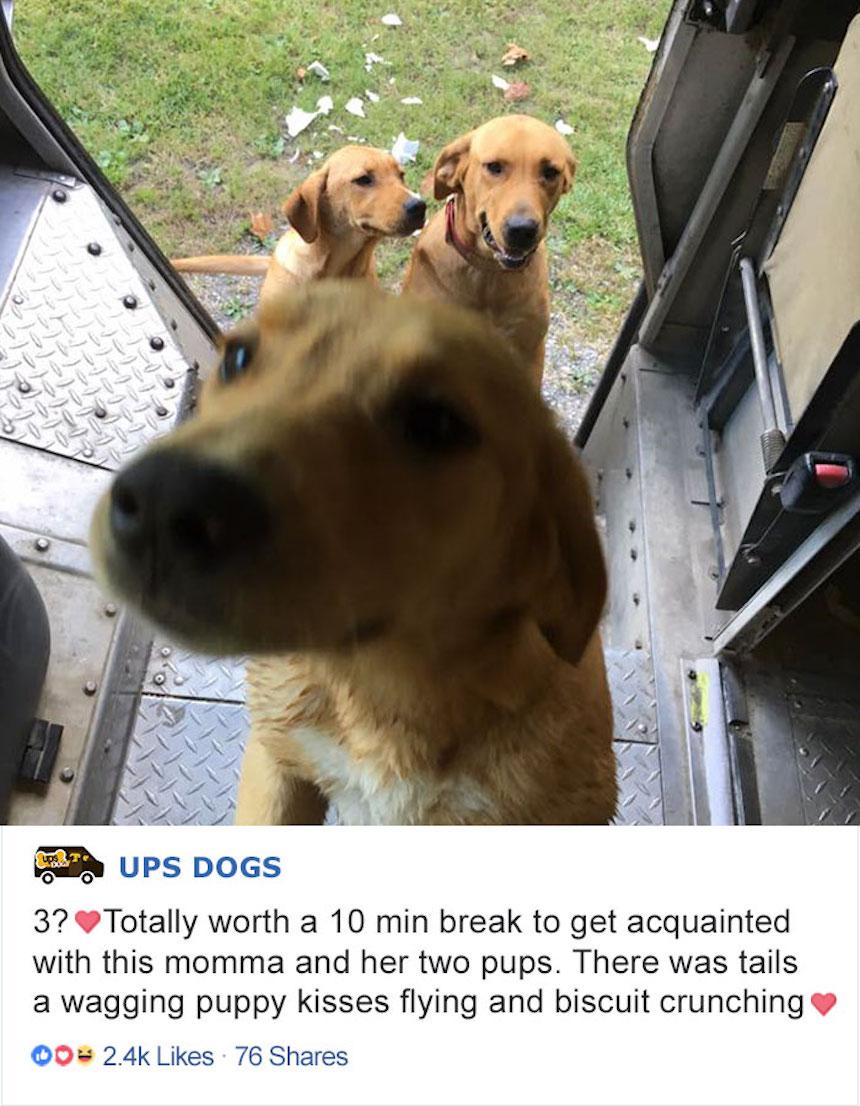 Empleados de UPS y perritos - Curisosos