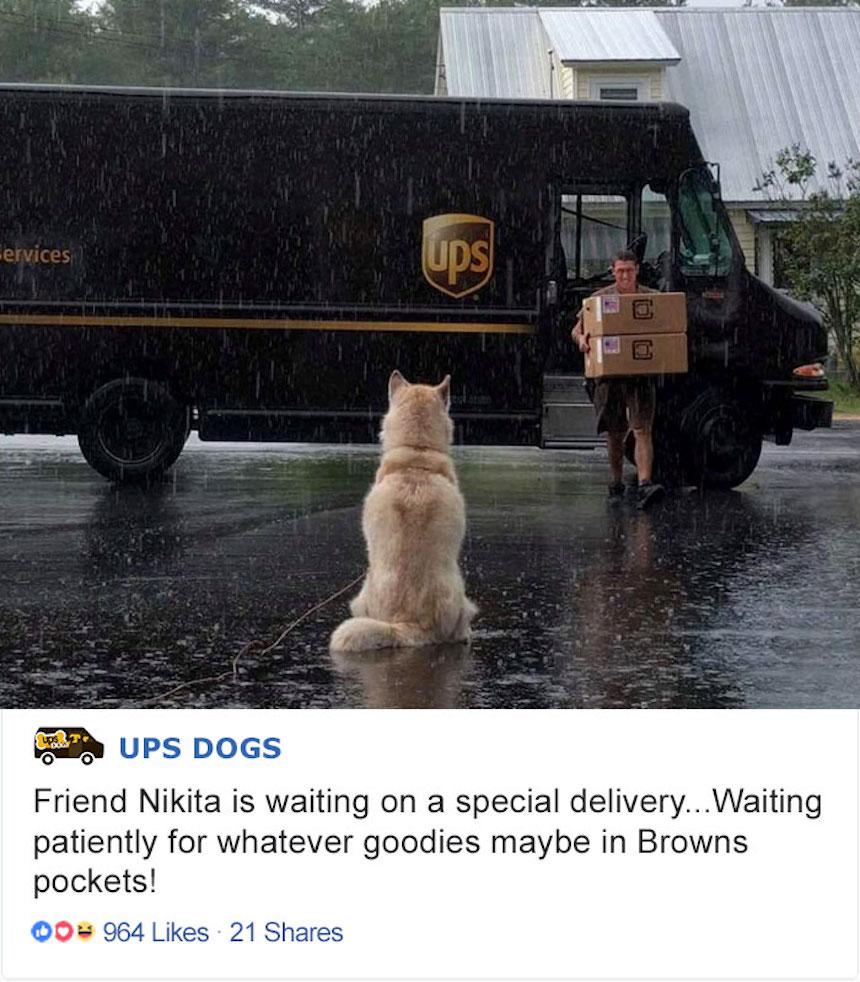 Empleados de UPS y perritos - Bajo la lluvia