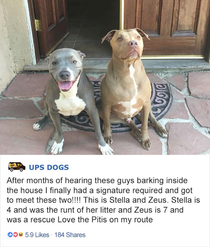 Empleados de UPS y perritos - Pitbulls