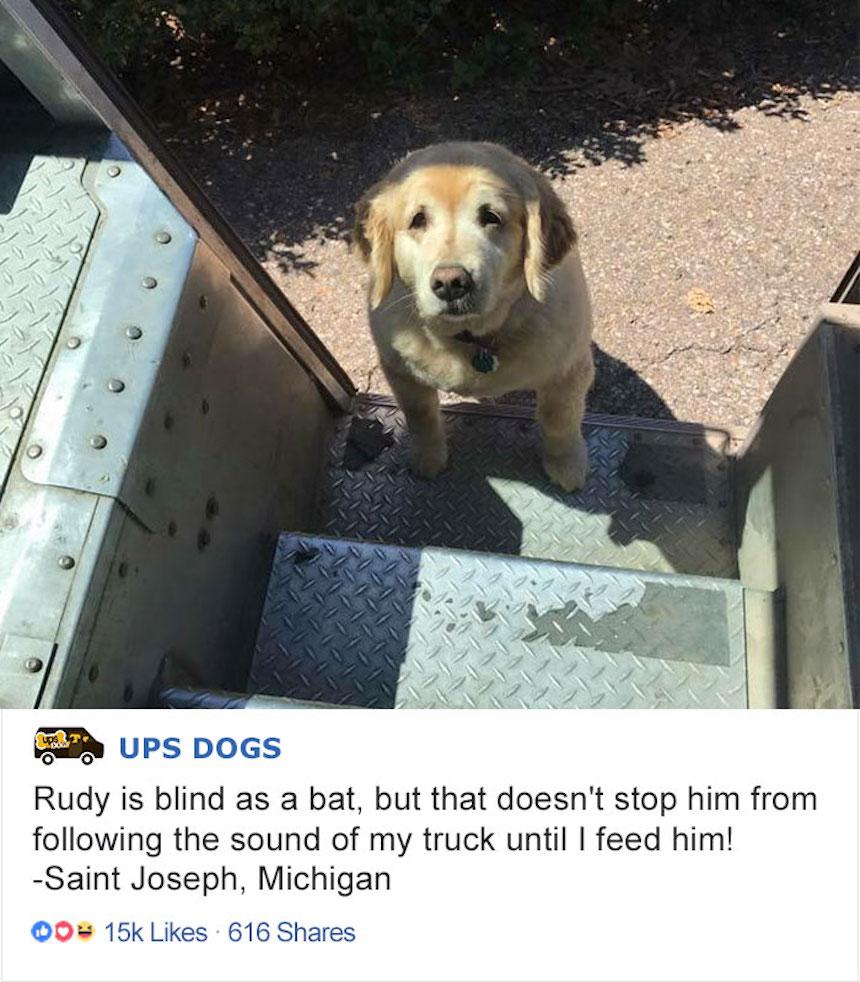 Empleados de UPS y perritos - Canino viejito