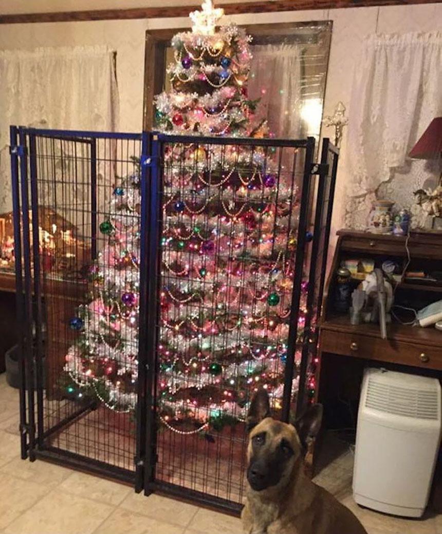 Protegiendo árboles de Navidad - Jaulas
