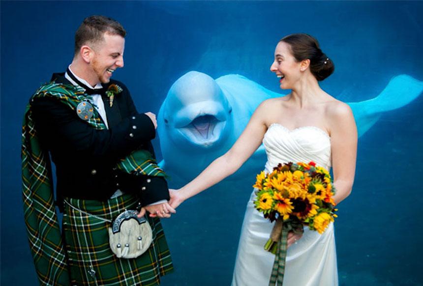 Photobombs de bodas - Ballenita feliz