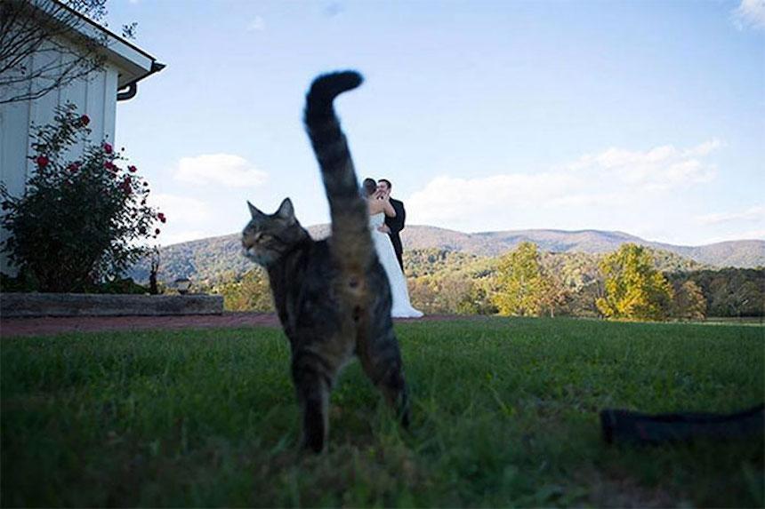 Photobombs de bodas - Trasero de gato