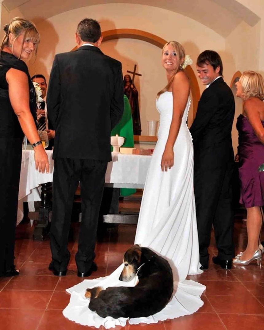 Photobombs de bodas - Perrito echado en el vestido