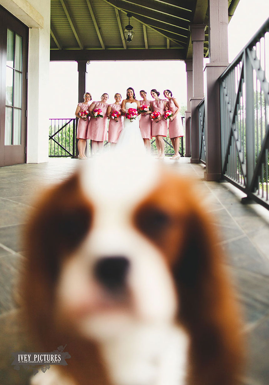 Photobombs de bodas - Cachorrito