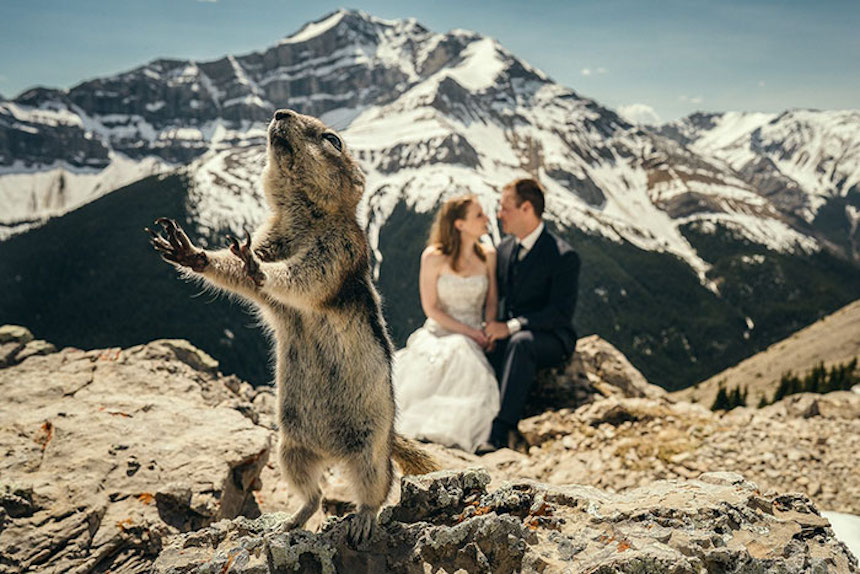 Photobombs de bodas - Perro de pradera