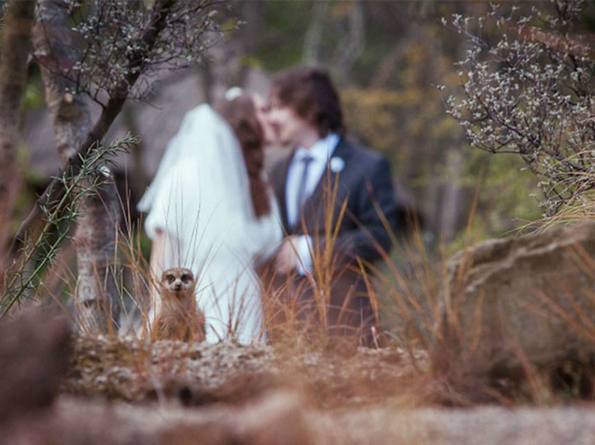 Photobombs de bodas - Animales