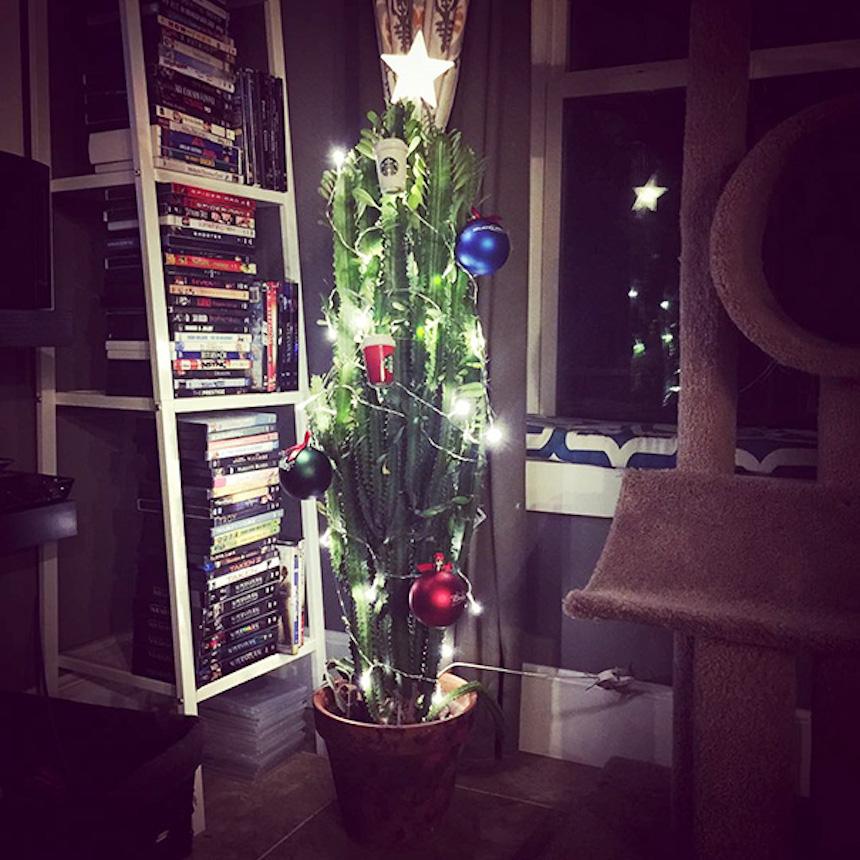 Protegiendo árboles de Navidad - Camuflaje