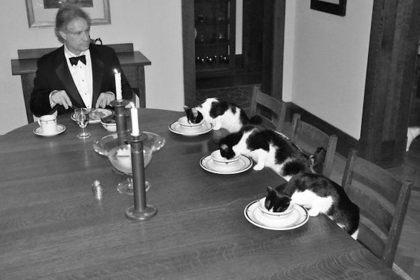 Fotos graciosas de novios y esposos - Cena con gatitos