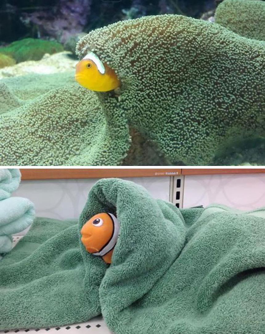 Fotos graciosas de novios y esposos - Nemo