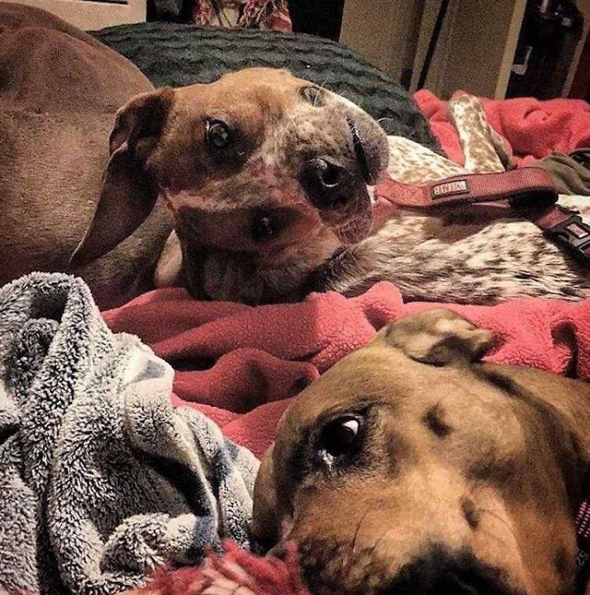 Imagen viral de un perrito