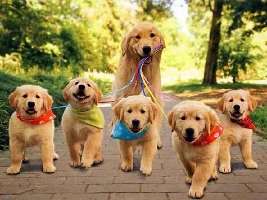 mamáperro y cachorros