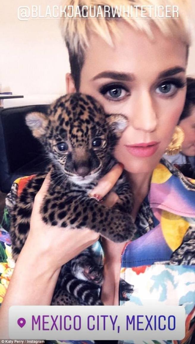 ¿Por qué acusaron a Katy Perry de abuso animal en su reciente visita a México?