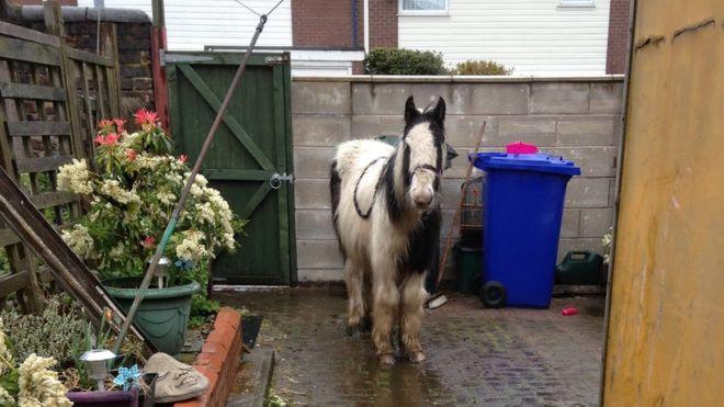 Casual: Una niña de 13 años pidió un caballo por internet porque YOLO